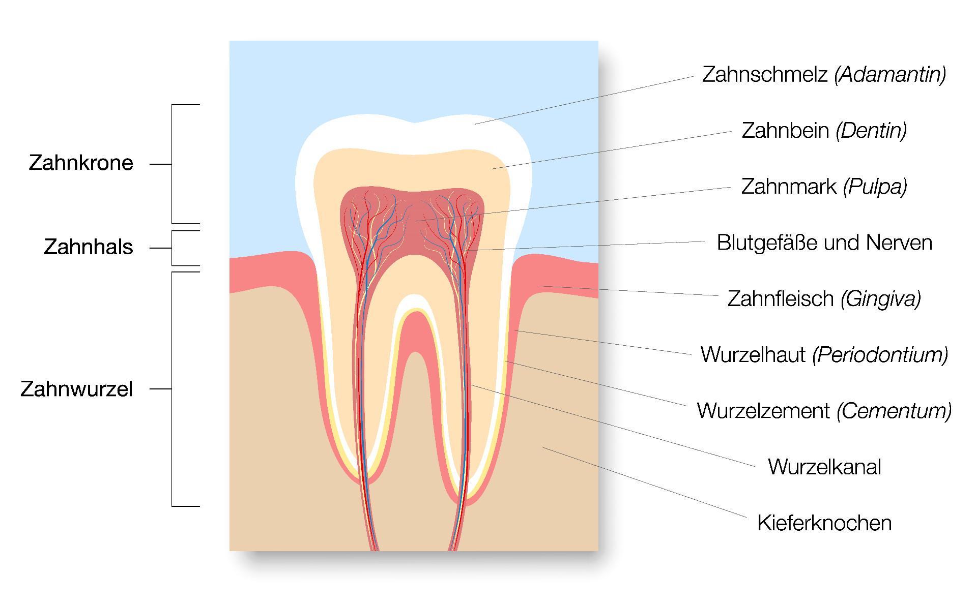 Die Wirkstoffe von Bleaching Strips dringen in den Zahnschmelz ein und verändern dort in einem chemischen Prozess (Oxidation) die Farbmoleküle.